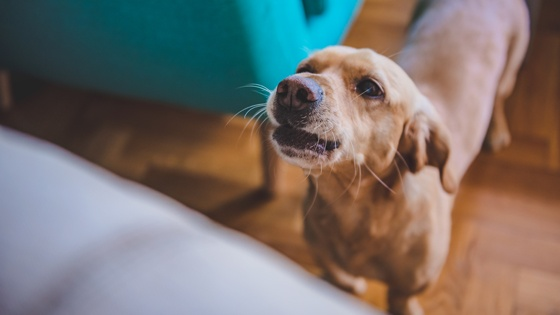 MAIN-IMG_stop-dog-from-barking-blog.jpg