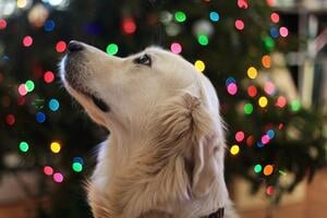 Dog in front of Christmas Tree