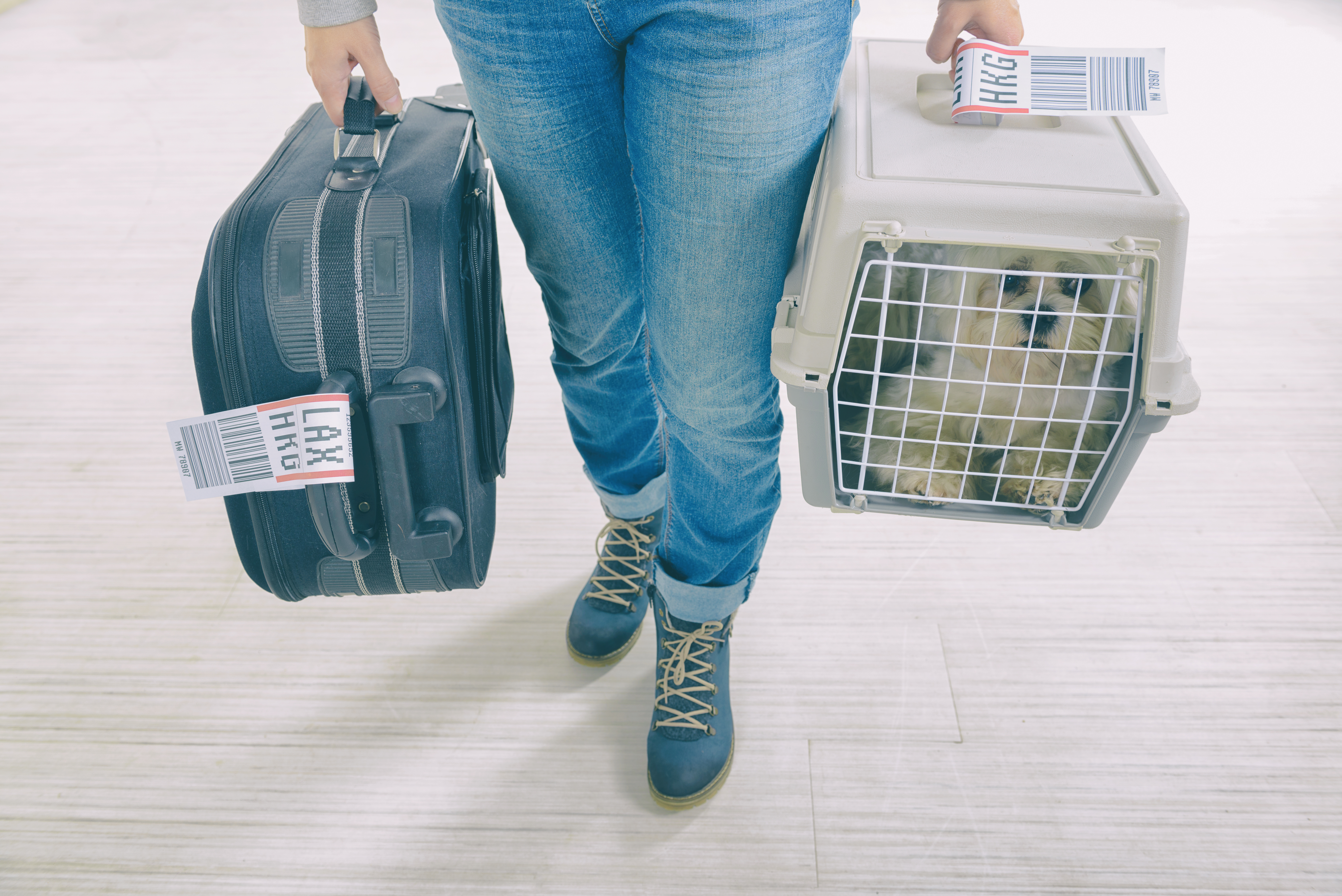 Tips for Transporting a Dog in an Airplane