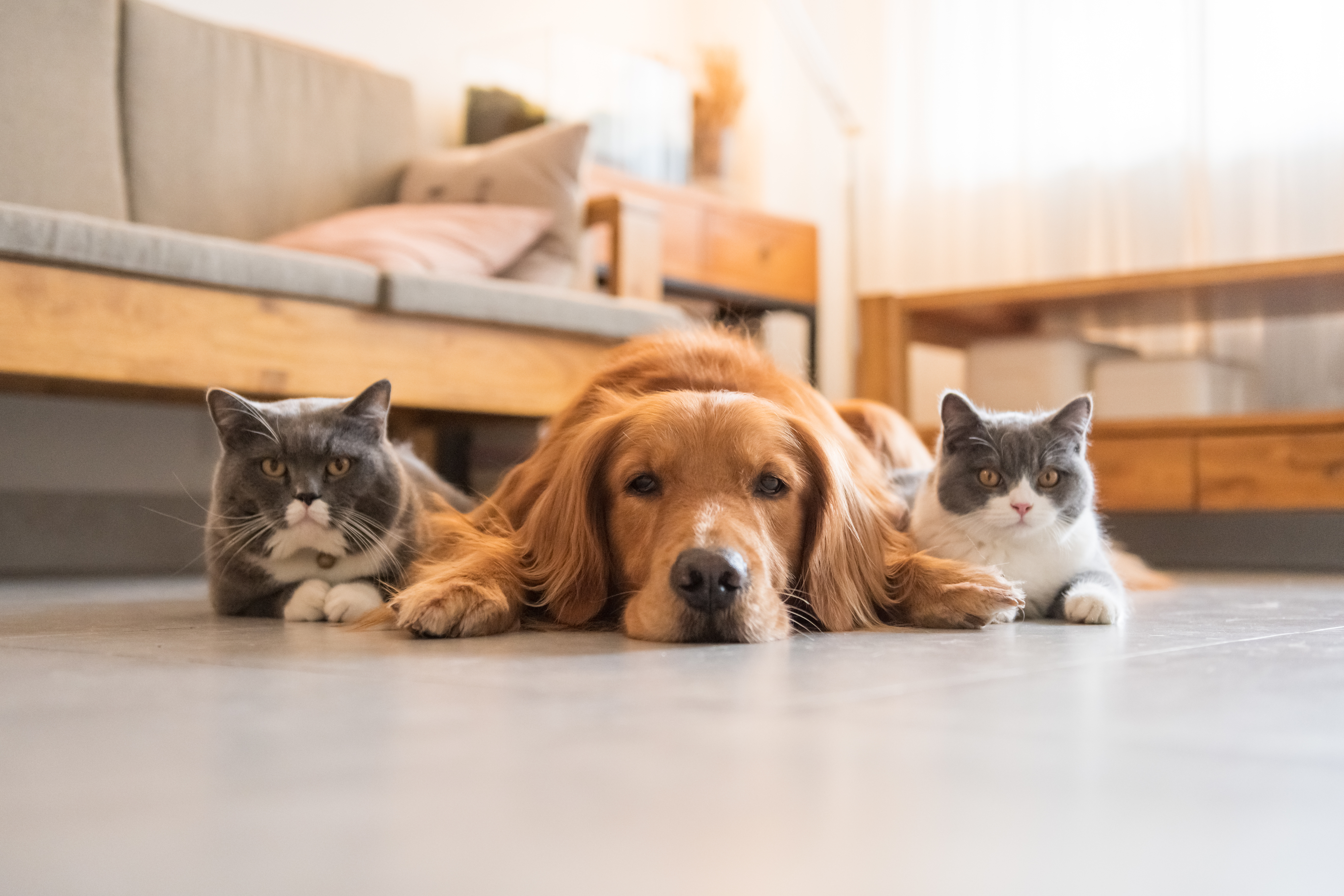 3 Steps to introduce a dog into a home with a cat