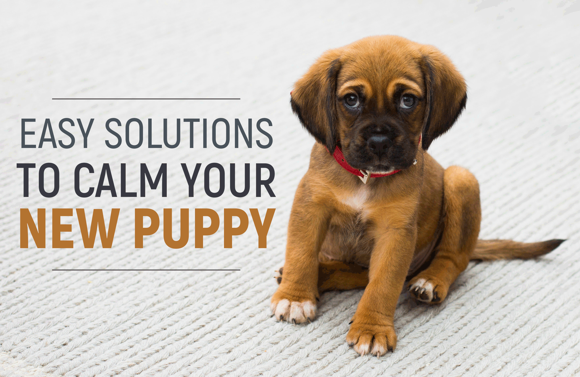 5 Easy Solutions to Calm Your New Puppy