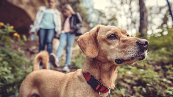 5 Essential Dog Hiking Supplies For Exploring With Your Pup