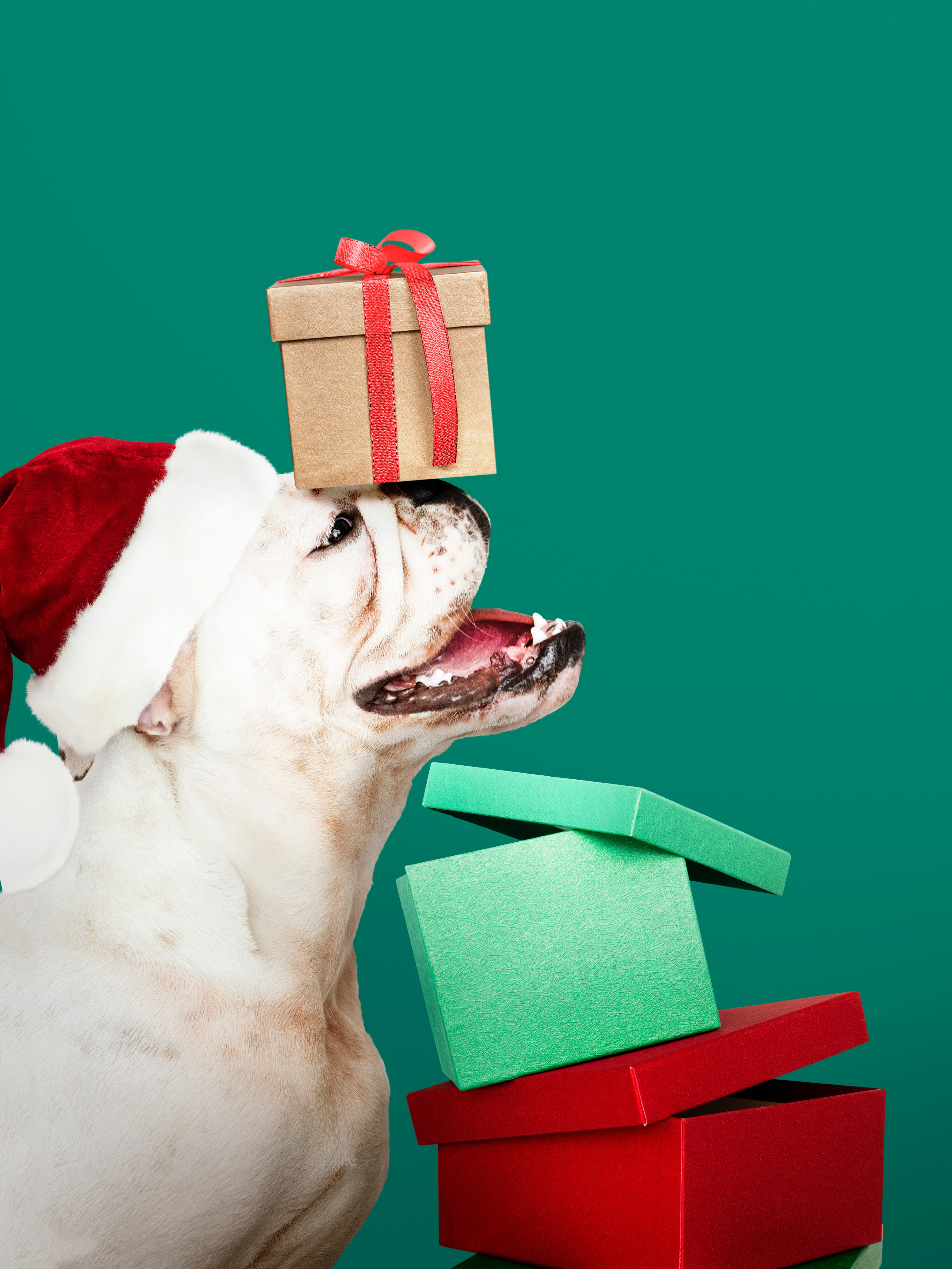 Best 2019 Boxing Day Deals for Your Dog