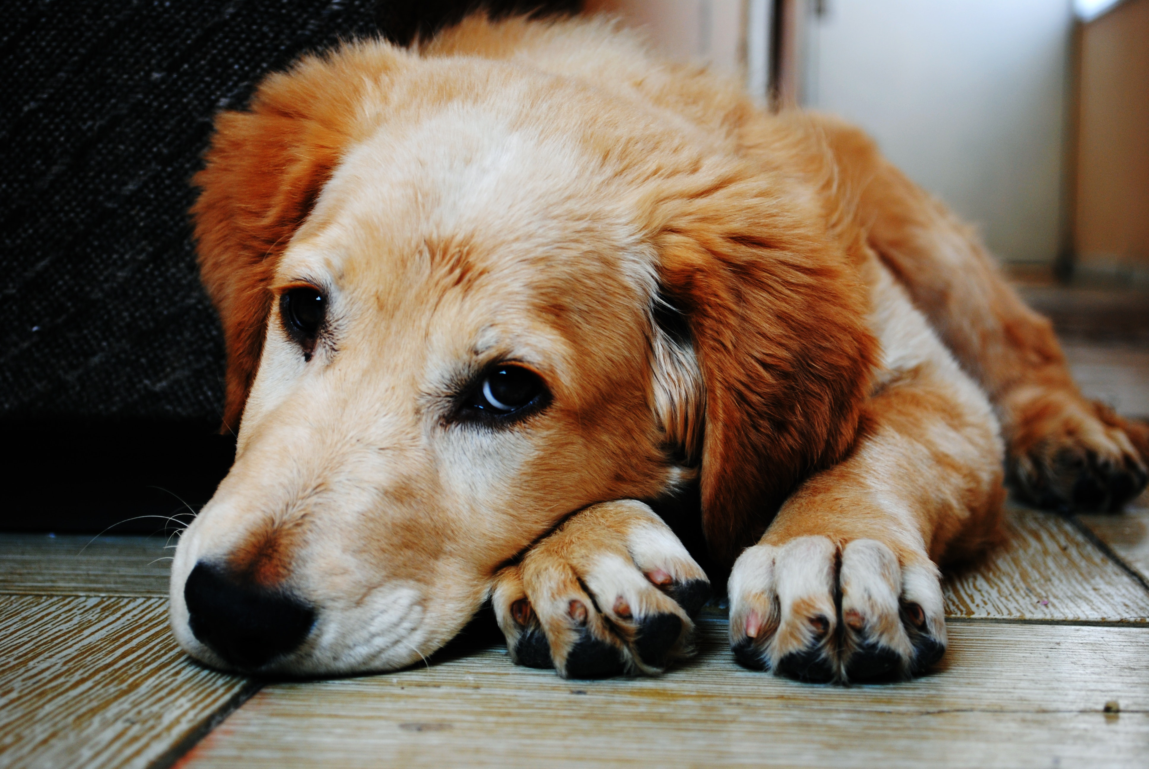 Dog Food Allergies: Symptoms and Solutions