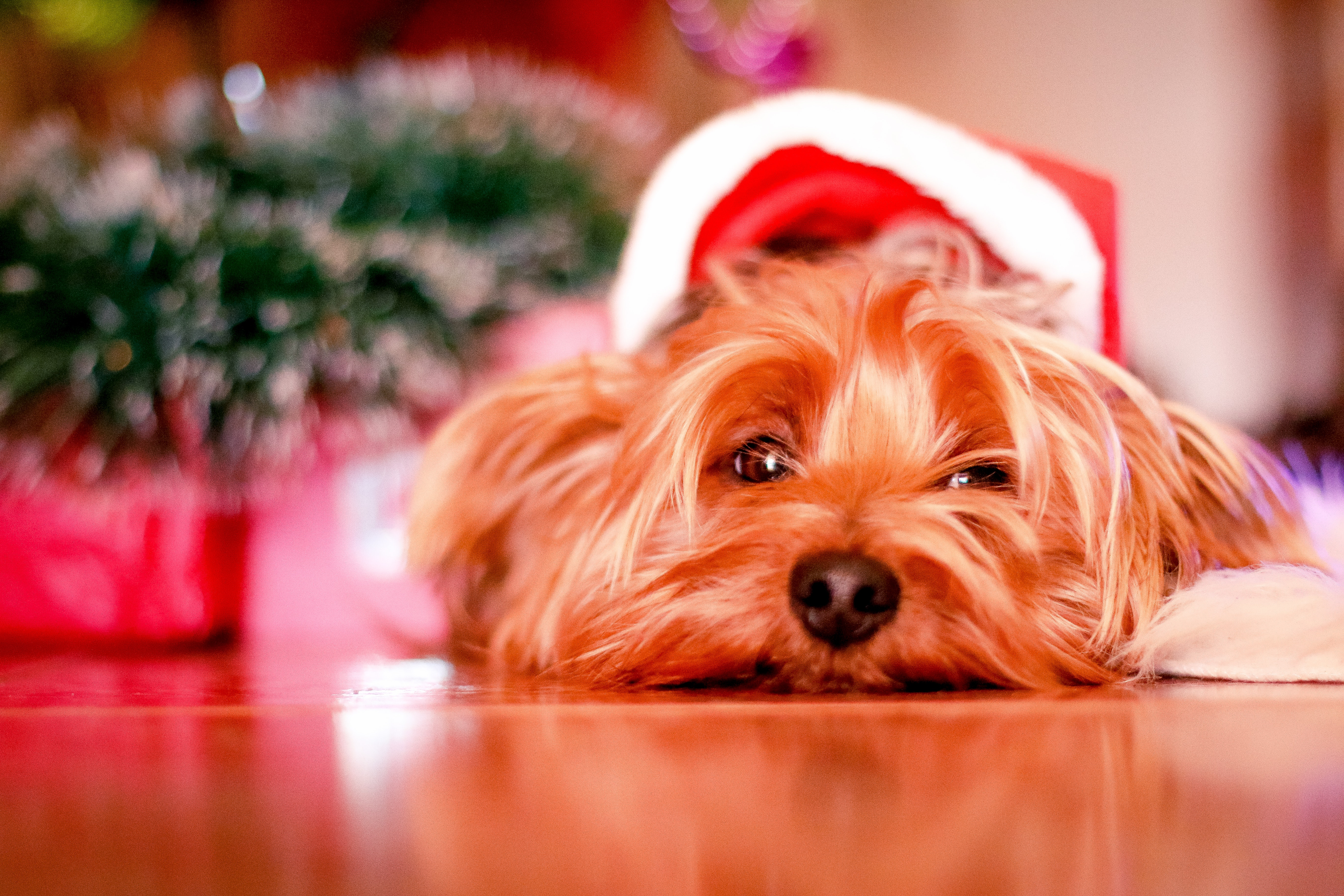 How to Keep Your Dog Happy and Healthy This Holiday Season