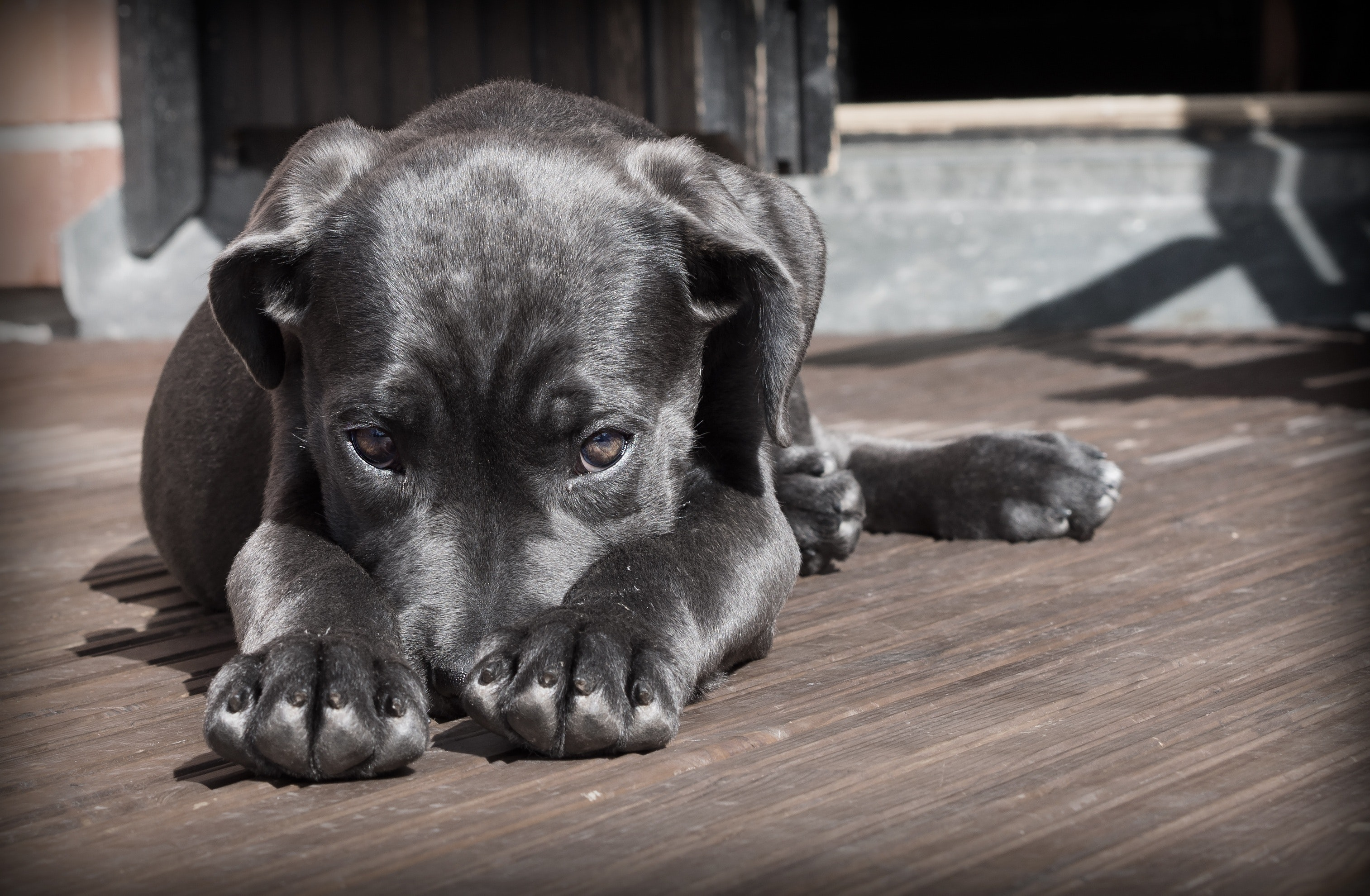 Fears and phobias in dogs: How to help them overcome