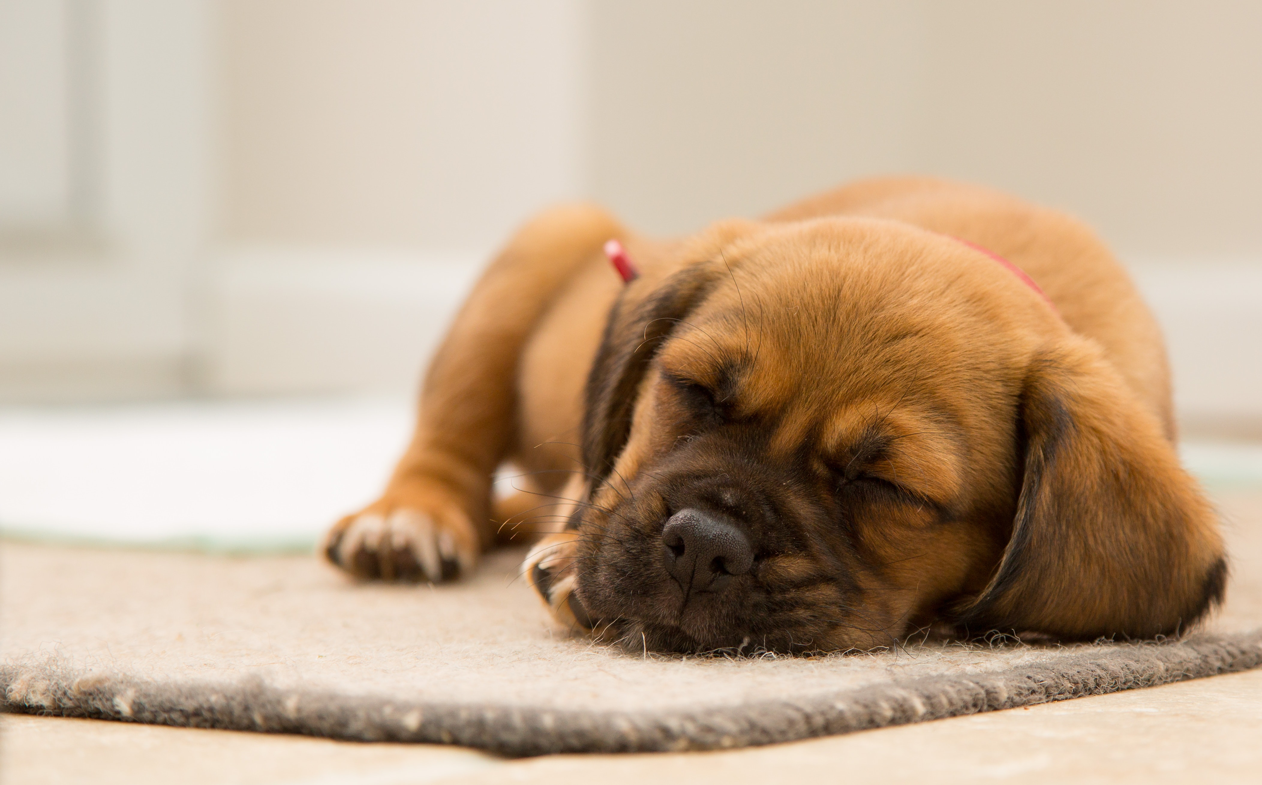 How Much Sleep do Animals Need?