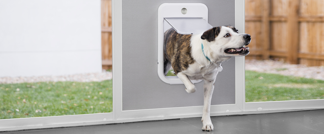 Our Biggest Pet Tech Product Launch Ever!